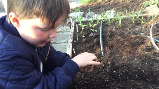 Learn how to plant seeds in your vegetable garden