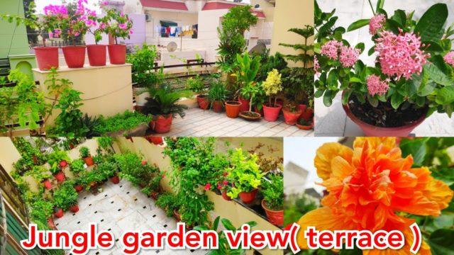 Jungle garden overview with names (Terrace garden), November rooftop garden