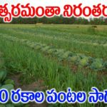 How to Grow Organic Vegetables || Organic Vegetable Gardening || SumanTV Tree