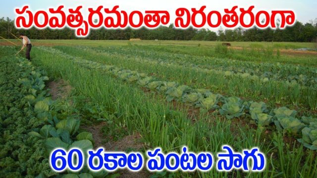 How to Grow Organic Vegetables || Organic Vegetable Gardening || SumanTV Tree