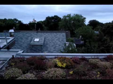 JP's green roof