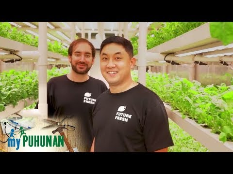 NXTLVL Farms | My Puhunan