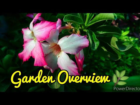 LEARNING GARDENING WITH MJ