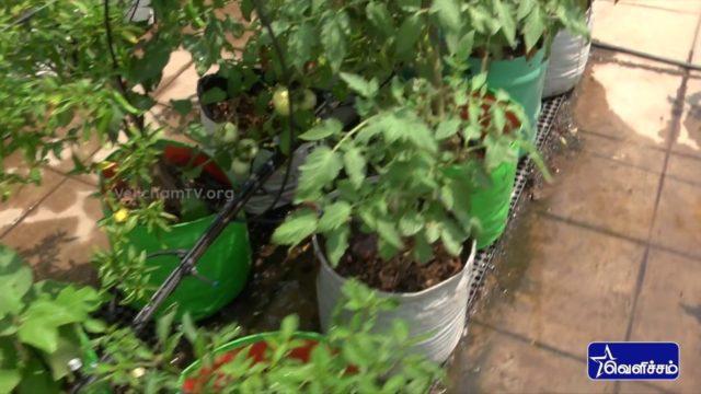 En Veetu Thottathil Epi -34 |Terrace-and-Roof Gardening | Videos | Velicham Tv Entertainment