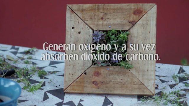 Aprende a diseñar jardines verticales y cuadros vivos l CórdobaX en edX.org