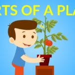 Parts of a Plant for kids    Parts of a Plant