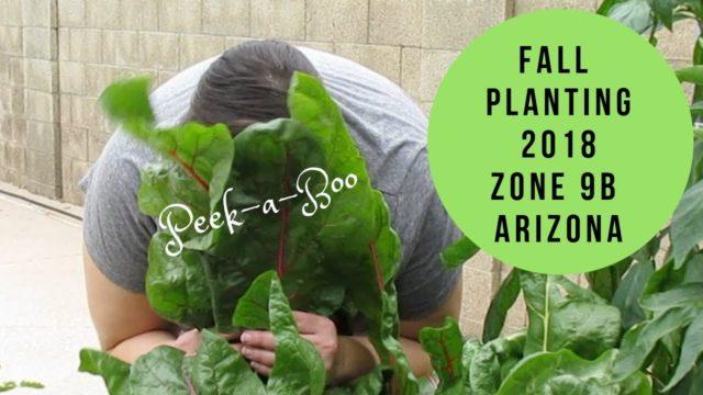 Zone 9 Arizona Backyard Garden: Zone 9b Arizona Fall Planting 2018