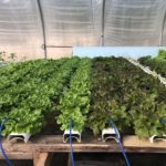 This Hydroponic Farm Is Growing Exponentially
