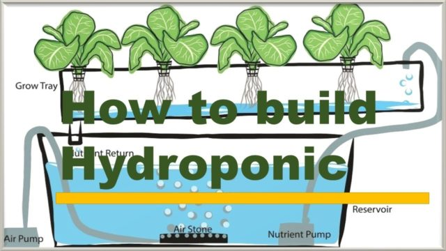 How to build hydroponic system at home
