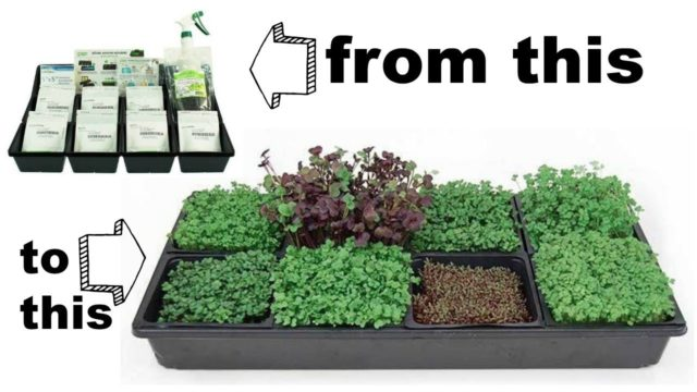 Hydroponic Microgreens Starter Kit from True Leaf Market