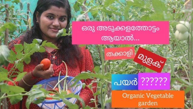 എന്റെ അടുക്കള തോട്ടം ! Organic #Vegetable Garden At Home !