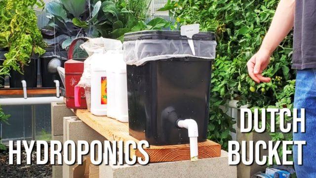 Hydroponics Dutch Bucket Breakdown & How-To