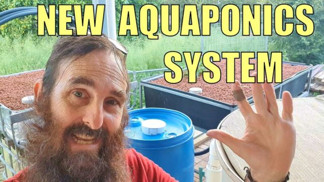 NEW Aquaponics System 🌱🐟 & Viewers Questions