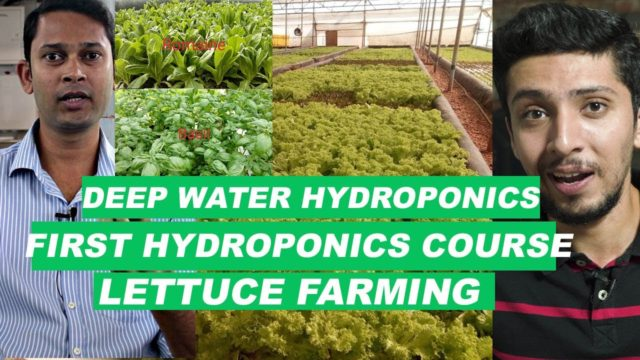 Deep Water Hydroponic Farming In India★First Hydroponics Course★Organic Lettuce Farming in India