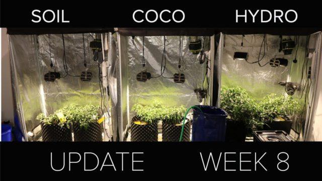 Soil vs coco vs hydro | Week 8 update