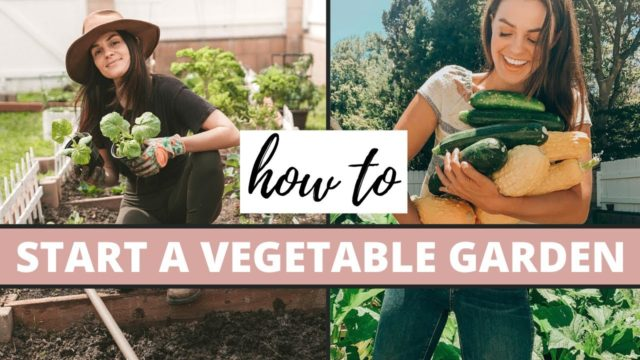 How To Start A Vegetable Garden | Gardening Tips
