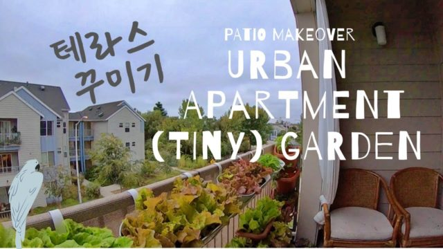 Setting up My Patio Garden |  Vertical Herb Garden and Window Box Gardening at Urban Apartment