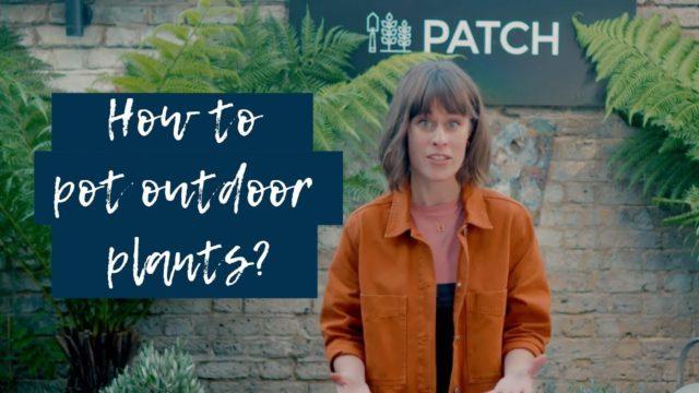 How to pot outdoor plants 🌴