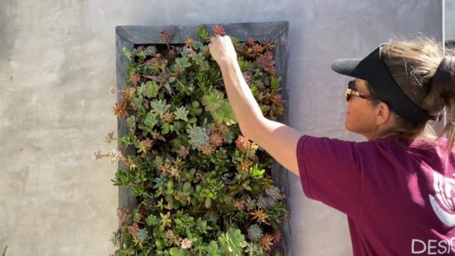 How to Water Your Succulent Wall Hanging