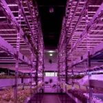 Biggest Indoor Vertical Farm in the Middle East