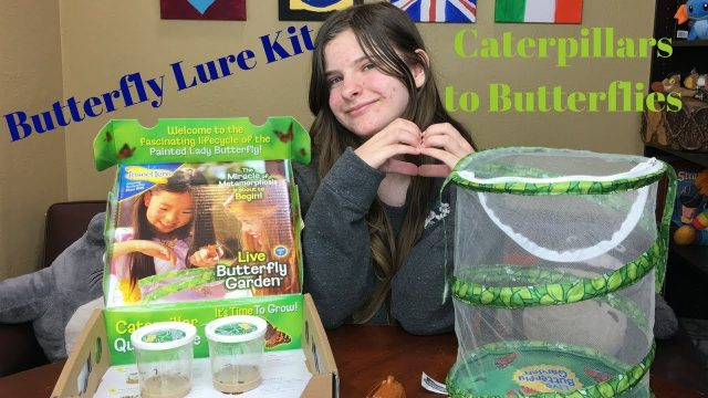BUTTERFLY KIT | Caterpillars to Butterflies | Watch With Me | Riley Cat