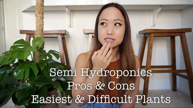 SEMI HYDROPONICS | PROS & CONS, EASY & DIFFICULT PLANTS