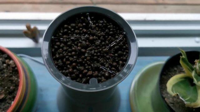 Botanium auto watering hydroponic gardening pot demo