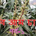টবে আম চাষ পর্ব-১ (Mango in roof garden) Bangla