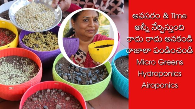 How to Grow Hydroponics / How to Grow Micro Greens at Home / Aeroponics /  Methi / Mustard / Chiya