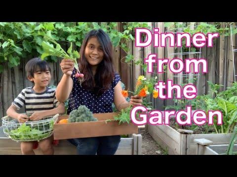 Dinner from the Backyard Garden | Harvest and Garden Tour | Vegetable Gardening for Beginners