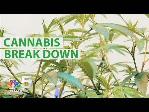 High Expectations: NBC 5 Breaks Down Cannabis in Illinois | NBC Chicago