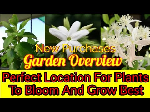 Sunday Update Garden Overview Info Of Best Location Of Plants To Get More Flowers & Healthy Growth