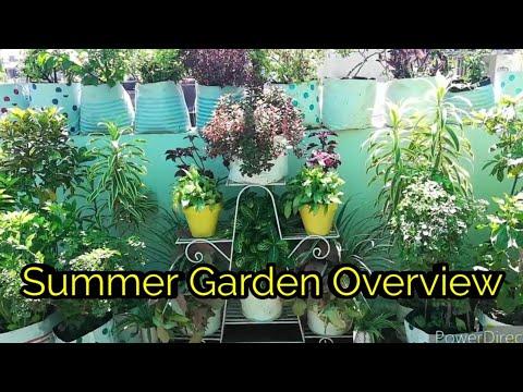 Sunday Update Garden Overview 🌿 3/5/20