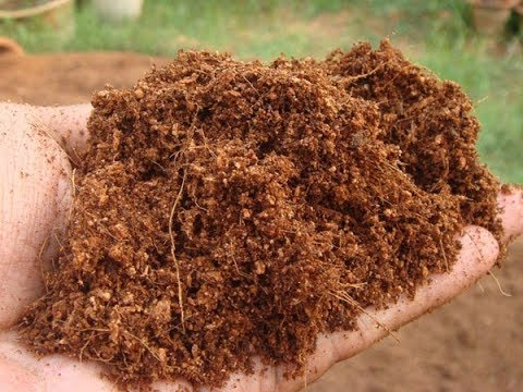 How to make Coco Peat at Home | Quick and Easy Guide