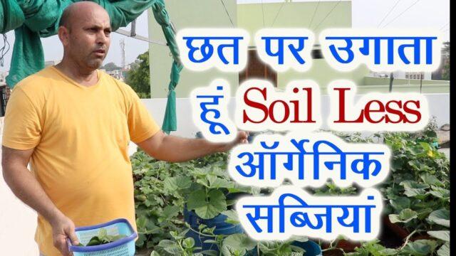मैं छत पर उगाता हूं Soil Less आर्गेनिक सब्जियां Master of Terrace, Roof Top, Kitchen Gardening
