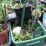 Vegetable Gardening Small Space in Containers Flower Pots Plants for Food Lettuce Onions Zucchini