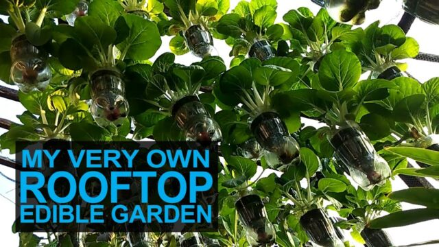My Very Own Rooftop Edible Garden I Container Gardening Ideas