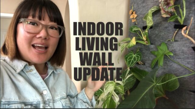 Indoor Living Wall Update | Plant It Forward