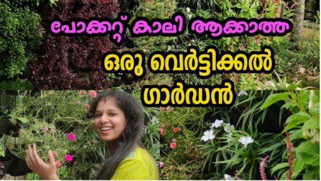 Vertical Garden തട്ടികൂട്ടാം കുറഞ്ഞ ചെലവിൽ / How To Setup a Vertical Garden / Gardening  Malayalam /