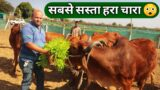 12 महीने होने वाला सस्ता चारा Hydroponic Green Fodder for Dairy Farm in India 9561621500