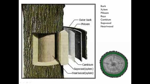 Introduction to Tree Pruning