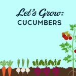 Let's Grow Cucumbers – Vegetable Gardening Tips