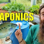 Starting an Aquaponics System | How to Start & What You Need
