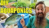Starting an Aquaponics System   How to Start & What You Need