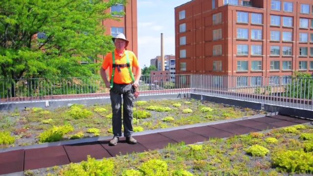 Irrigation for Green Roofs Create Unexpected Garden Spaces
