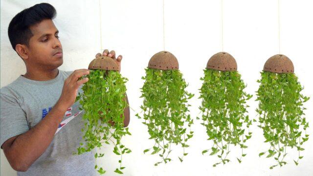 hanging plant ideas//hanging plants//hanging decoration ideas