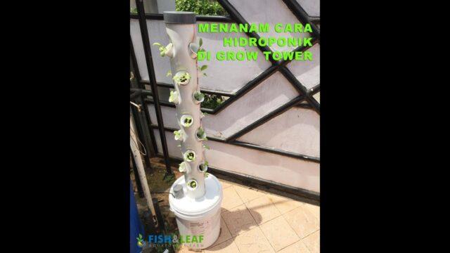 Menanam Cara Hidroponik di Grow Tower