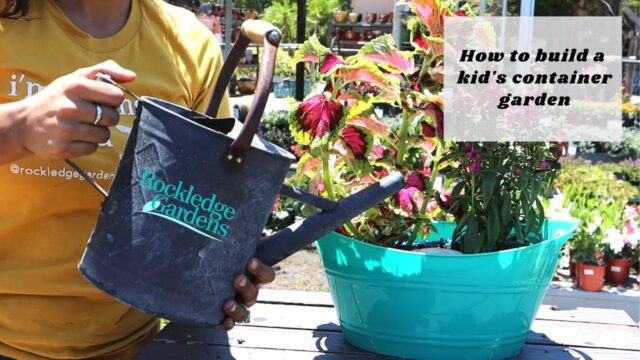 kid's garden kit