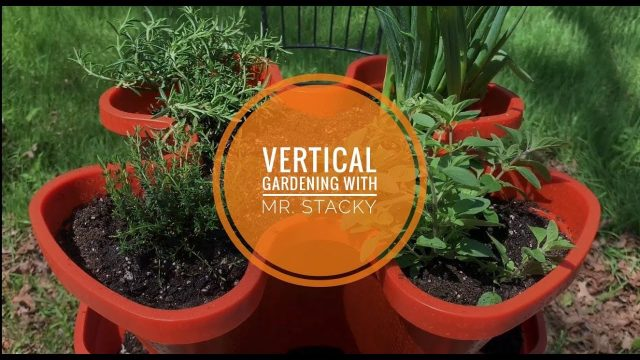 Vertical Gardening with Mr. Stacky