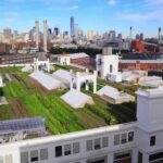 Brooklyn Grange Rooftop Farm #2 – Project of the Week 6/6/16